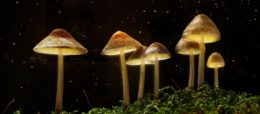 houby_les