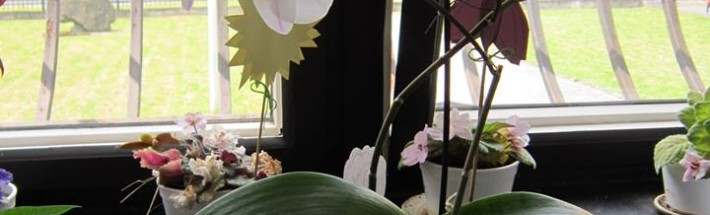 orchidej v praci
